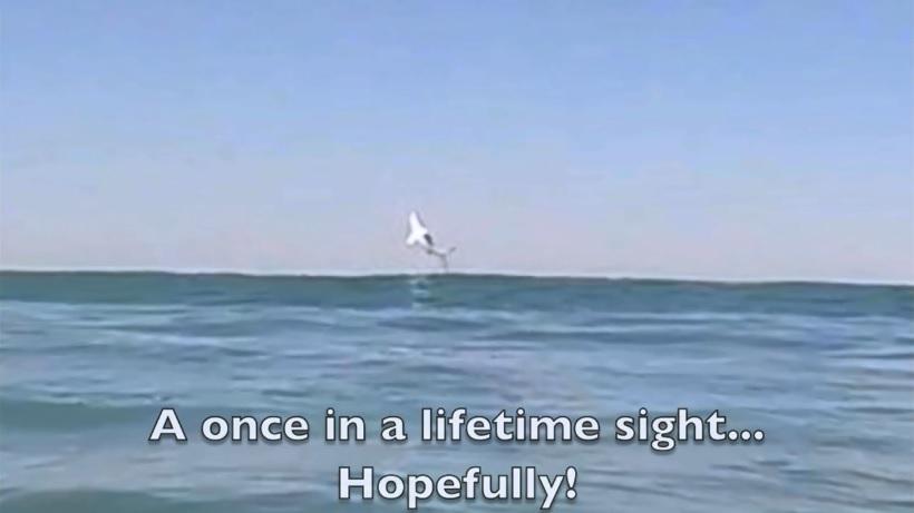 Great White Shark CA GoPro