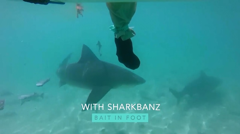 Sharkbanz Bull Shark