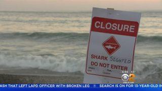 3メートルほどのホホジロザメ出没により南カリフォルニアで今年3度目のビーチ閉鎖