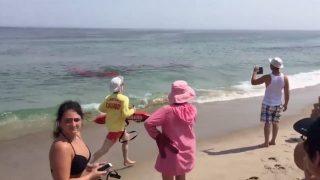 米国マサチューセッツ州ケープコッドのノーセットビーチでシャークアタック発生