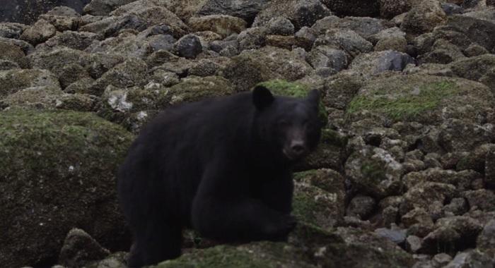 チッパ・ウィルソンが寒いカナダへ!サーフムービー「The Seawolf」未収録動画