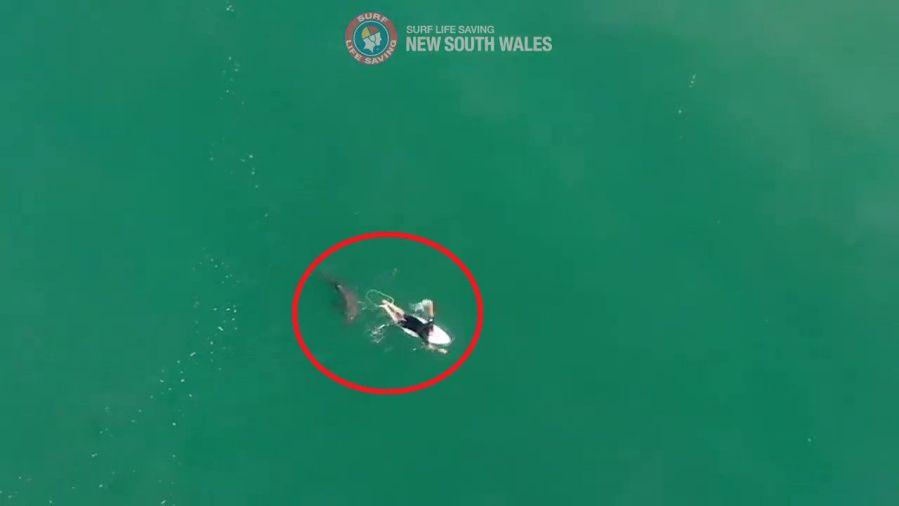 マット・ウィルキンソンがサメに狙われた緊迫のドローン映像が公開